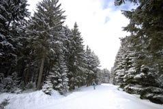 Esqui na floresta Imagens de Stock Royalty Free