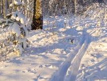 Esqui-trilha na floresta do inverno fotos de stock royalty free