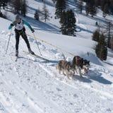 Esquiador através dos campos e cão de puxar trenós dois siberian Imagem de Stock