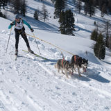 Esquiador a campo través y perro esquimal siberiano dos Imagen de archivo