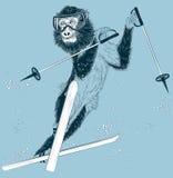 Esquiador del mono en un fondo del invierno Imagen de archivo
