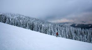 Esquiador del paisaje del invierno que baja de la colina en bosque Fotografía de archivo libre de regalías