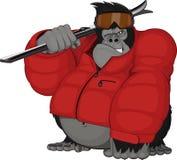 Esquiador do gorila Fotos de Stock Royalty Free