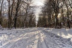 Esquiador en la nieve en el bosque del invierno Imagenes de archivo