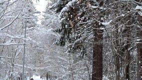 Esquiador en un parque del invierno almacen de video