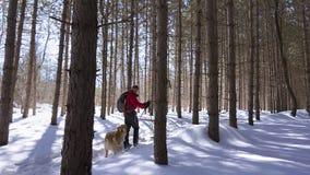 Esquiador nórdico en el bosque con su perro foto de archivo