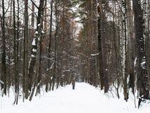 Esquiador na aleia coberto de neve no parque no inverno imagens de stock royalty free