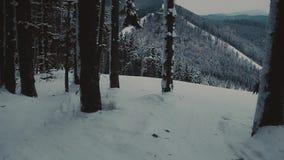 Esquiador que vai abaixo da inclinação em uma estância de esqui nas madeiras filme