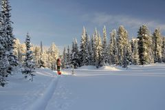 Esquiador turístico en esquí-pista Imagen de archivo libre de regalías