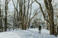 esquiador y trayectoria a través del bosque por completo de los árboles nevados para Imagen de archivo libre de regalías