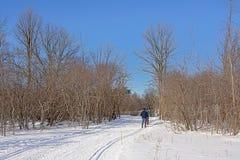 Esquiadores del campo a través en un rastro a lo largo de baretrees en la nieve fotografía de archivo