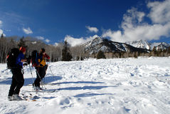 Esquiadores do país transversal imagem de stock royalty free