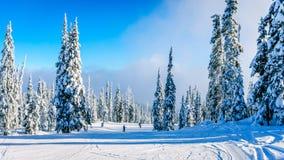 Esquiadores que vão abaixo de uma corrida ou de uma pista bonita Imagem de Stock