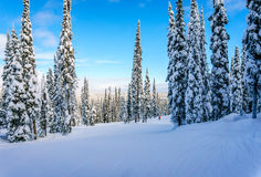 Esquiadores que vão abaixo de uma corrida ou de uma pista bonita Imagens de Stock