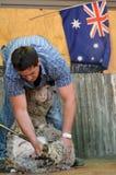 Esquilador australiano de las ovejas Fotos de archivo libres de regalías
