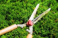 Esquileos que cultivan un huerto a los setos y a los arbustos del ajuste Foto de archivo