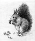 Esquilo ilustração do vetor