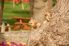 Esquilo foto de stock