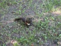esquilo video estoque
