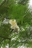 Esquilo branco no mais forrest Imagens de Stock