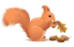 Esquilo com bolotas Imagem de Stock