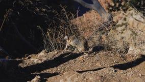 Esquilo com maca foto de stock royalty free