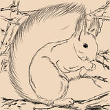 Esquilo da ilustração Forest Wild Imagem de Stock