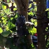 Esquilo de pedra Fotografia de Stock
