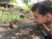 Esquilo do menino e da palma imagem de stock royalty free