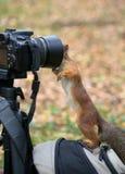 Esquilo e a câmera Imagens de Stock