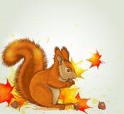 Esquilo e folhas de bordo Fotos de Stock