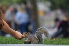 Esquilo e menina Fotografia de Stock
