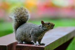 Esquilo em um piquenique imagem de stock