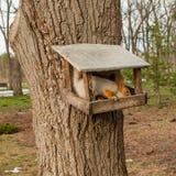 Esquilo em uma árvore em um comedoiro imagem de stock royalty free