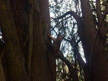 Esquilo em uma árvore em um jardim botânico imagens de stock royalty free