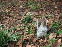 Esquilo em uma terra Fotos de Stock Royalty Free
