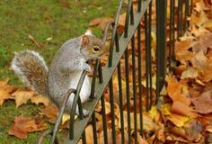 Esquilo engraçado Imagens de Stock