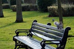 Esquilo engraçado Imagem de Stock Royalty Free