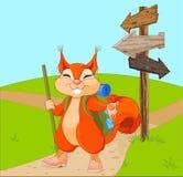 Esquilo engraçado para uma caminhada Imagens de Stock