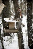 Esquilo na floresta imagem de stock