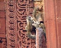 Esquilo na parede Imagens de Stock Royalty Free
