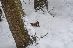 Esquilo no parque da cidade do inverno Fotografia de Stock Royalty Free