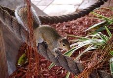 Esquilo no ramo de árvore fotografia de stock