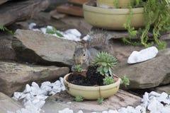 Esquilo que alimenta em plantas de jardim fotografia de stock royalty free