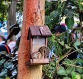 Esquilo que come o alimento do potenciômetro de suspensão Foto de Stock Royalty Free
