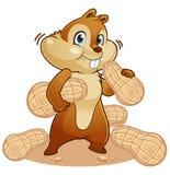 Esquilo que come porcas Fotografia de Stock