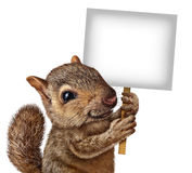 Esquilo que guarda um sinal Imagem de Stock