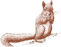 Esquilo selvagem Imagens de Stock Royalty Free