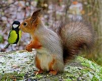Esquilo vermelho euro-asi?tico e grande melharuco no close up da floresta do outono imagem de stock