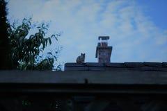 Esquilo visto cedo na manhã imagens de stock royalty free